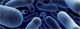The Bacteria Battle Inside Us